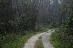 Un sentiero nel bosco fotografie stock libere da diritti