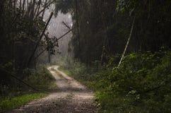 Un sentiero nel bosco Fotografia Stock