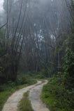Un sentiero nel bosco immagini stock