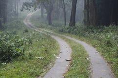 Un sentiero nel bosco che passa una foresta nebbiosa immagine stock libera da diritti