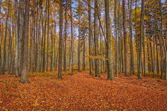 Un sentiero nel bosco con i colori dell'autunno Fotografie Stock Libere da Diritti
