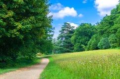 Un sentiero per pedoni dal legno di estate Fotografia Stock