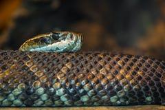 Un serpente strisciante immagine stock