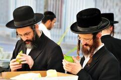 Un servizio di quattro specie per la festa ebrea di Sukkot Immagini Stock Libere da Diritti