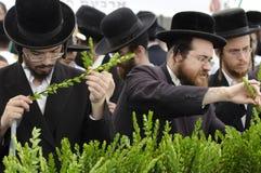 Un servizio di quattro specie per la festa ebrea di Sukkot Immagine Stock