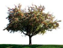 Un seul arbre images libres de droits