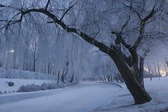 Un seul arbre Image stock