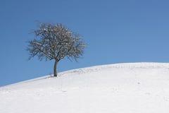Un seul arbre sur la côte de neige image stock