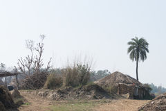 Un seul côté droit de palmier-dattier la hutte image libre de droits