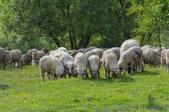 Un sheepfold encima de la colina en Transilvania imagenes de archivo
