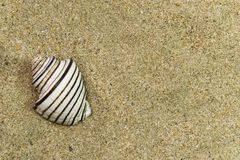 Un shell Fotografía de archivo