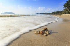 Un shell en la playa Imagen de archivo libre de regalías