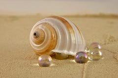 Un shell y mármoles en la arena de la playa foto de archivo