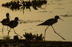Un silhoette d'oiseau image stock