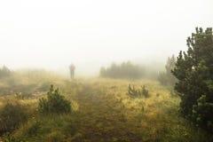 Un silhoutte nella foresta coperta dalla nebbia fotografie stock