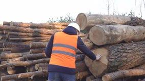Un silvicultor caucásico del hombre comprueba la calidad del bosque y del grueso de los registros cortados, la industria almacen de metraje de vídeo