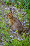Un silvilago del ` s di Audubon in st di Mackinac Deerland Ignace, Michigan fotografia stock
