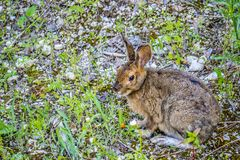 Un silvilago del ` s di Audubon in st di Mackinac Deerland Ignace, Michigan immagini stock