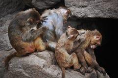 Un singe à Qingdao, Chine photos stock