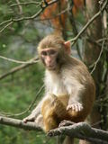 Un singe Photographie stock libre de droits