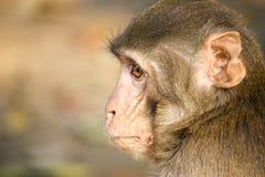 Un singe dans la forêt image stock