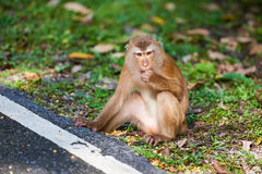 Un singe de macaca, Khao Toh Sae Viewpoint sur la plus haute colline dedans Photos stock