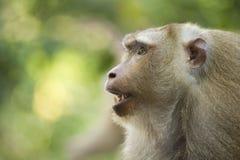 Un singe en Thaïlande image stock