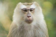 Un singe en Thaïlande photo libre de droits