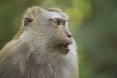 Un singe en Thaïlande photos stock