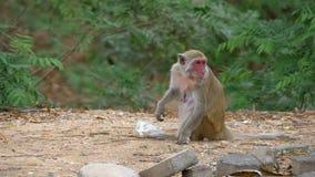 Un singe et un sac de déchets en plastique dans la jungle thailand Mouvement lent clips vidéos