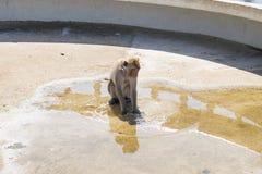 Un singe jouant sur l'eau Photo libre de droits