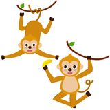 Un singe pendant de l'arbre Photo libre de droits