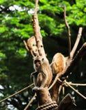 Un singe regardé l'appareil-photo photo libre de droits
