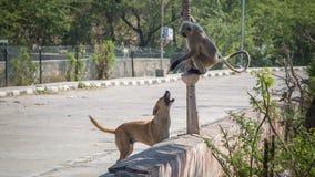 Un singe se reposant sur un arbre près d'un lac à Jaipur images stock