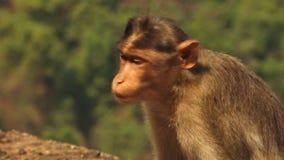 Un singe se repose pendant que le soleil brille là-dessus banque de vidéos