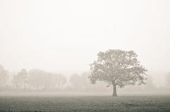 Un singolo alberino marcio. Fotografia Stock Libera da Diritti
