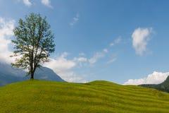 Un singolo albero sul prato Immagini Stock Libere da Diritti