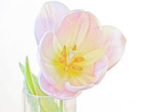 Un singolo fiore del tulipano in un vaso fotografia stock libera da diritti