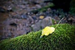 Un singolo foglio giallo nella caduta di autunno fotografia stock