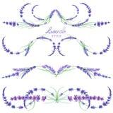 Un sistema con las fronteras del marco, los ornamentos decorativos florales con la lavanda de la acuarela florece para la boda o  Fotos de archivo libres de regalías