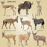 Un sistema de antílope africano realista - oryx, antílope, más hartebeest, dik-dik, impala, gacela, ñu, duiker, kudu, ñu azul Foto de archivo libre de regalías