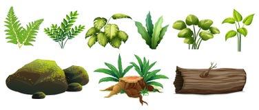 Un sistema de Forest Element Imagenes de archivo