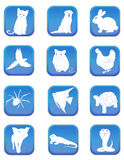 Iconos del animal doméstico stock de ilustración