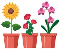Un sistema de la flor en pote ilustración del vector