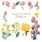 Un sistema de las flores y de la hoja de la acuarela Vector la colección con las hojas y las flores, dibujo de la mano Fotografía de archivo