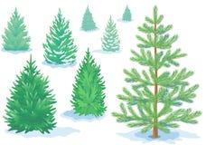 Un sistema de los árboles de pino, abetos con diversos grados de detalle Imágenes de archivo libres de regalías