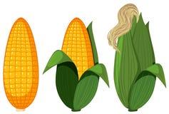 Un sistema de maíz orgánico ilustración del vector
