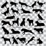 Un sistema de siluetas negras de perros en un fondo transparente Conjunto de ilustraciones del vector stock de ilustración