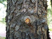Un soggiorno della striscia nel tronco dell'albero immagini stock