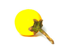 Un solanum jaune. Images libres de droits
